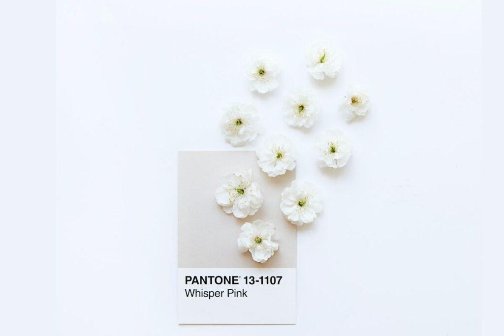 Pantone swatch part of branding process